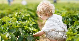pesticicde expsore